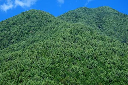 育林・造林事業